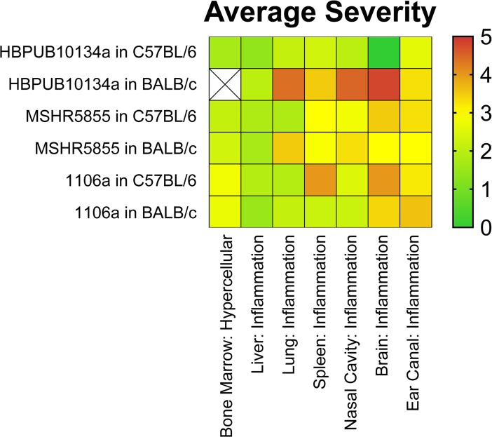 Heat map depicting the average severity observed in BALB/c and C57BL/6 mice after exposure to aerosolized B . pseudomallei .