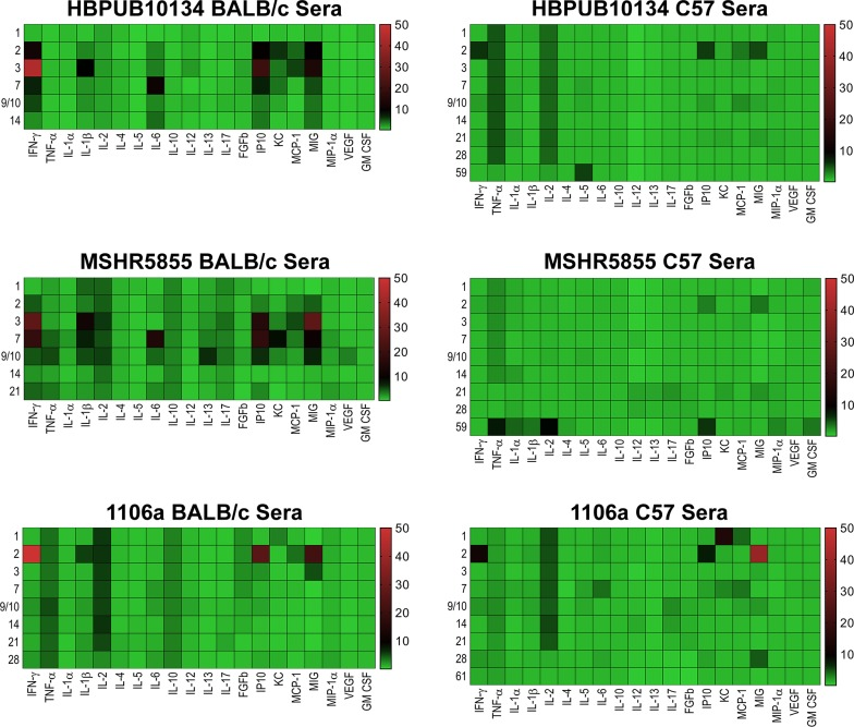 Changes in cytokine/chemokine levels in sera from BALB/c and C57BL/6 mice after aerosol exposure to B . pseudomallei . Sera were examined for cytokine/chemokine expression at different times after exposure of BALB/c or C57BL/6 mice to HBPUB10134a, or MSHR5855, or 1106a. For each time point after exposure N = 5, and geometric means were determined. Fold changes in cytokines/chemokines in sera were determined by dividing the amount in geometric means (pg/ml) determined after exposure at a specific time by the amount found in sera from naïve, normal BALB/c or C57BL/6 mice (pg/ml). For cytokines/chemokines in sera from naïve BALB/c mice, N = 6, and from C57BL/6 mice, N = 5. The number on the left of each panel shows the days after exposure. The bar on the right of each heat map shows the fold-change in expression of each cytokine/chemokine after time of exposure.