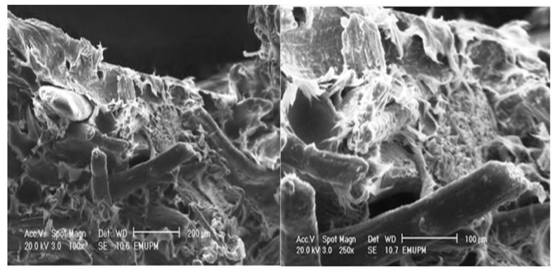 The tensile fracture surface micrograph of PBAT biocomposite reinforced with 40 (wt %) of EFB.