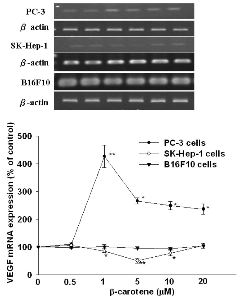 Effect of <t>β-carotene</t> (BC) on mRNA expression of VEGF in SK-Hep-1, PC-2 and B16F10 cells. Cells were incubated with BC (0–20 μM) for 6 h. Data (means ± SD) are from three or four separate experiments; * P
