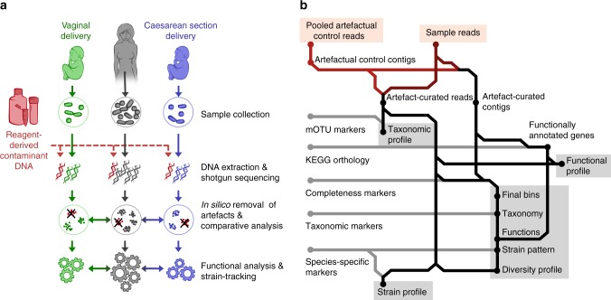 Curation of metagenomic data. a Schematic representation of the workflow for removal of artefacts introduced during genomic extraction or preparation of sequence libraries in the low-biomass neonatal samples. b Sample-wise bioinformatic workflow for removal of artefactual sequences from metagenomic data, extraction of taxonomic and functional profiles, and reconstruction of genomes and strain-resolved analyses. The resulting data sets used for inter-sample comparisons are highlighted in grey. mOTU, metagenomic operational taxonomic unit