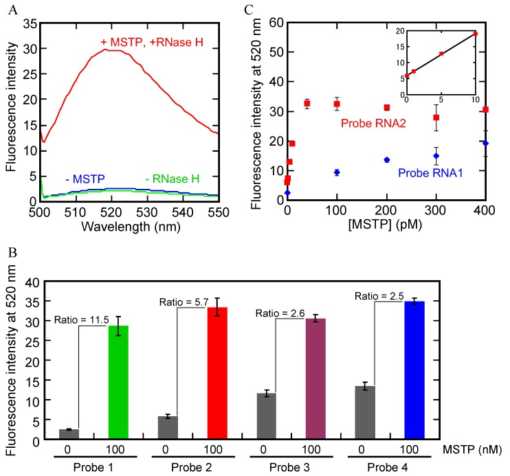 ( A ) Fluorescence spectra with probe 1 in the absence or presence of RNase H, MSTP or both; ( B ) Fluorescence at 520 nm with probes 1–4 in the absence or presence of MSTP. Each value is the average calculated from the three replicate data sets and each error bar represents the standard deviation; ( C ) Plots of fluorescence at 520 nm with probe 1 or probe 2  vs.  MSTP concentration. Each data pint is the average calculated from the three replicate data sets and each error bar represents the standard deviation.