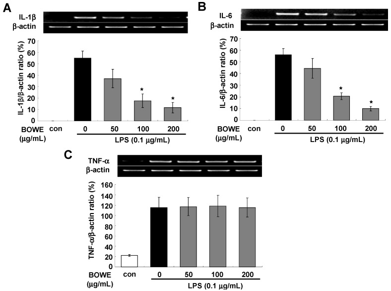 Effect of BOWE on the mRNA expressions of IL-1β ( A ), IL-6 ( B ), and TNF-α ( C ): BV-2 cells were pretreated with or without the indicated concentrations of BOWE for 4 h and then stimulated with LPS (0.1 μg/mL) for 18 h. Total RNA was isolated and mRNA expressions of the aforementioned cytokines were measured by RT-PCR. β actin was used as a housekeeping gene. The quantification of relative band intensities from three independentexperiments were analyzed by densitometry and expressed as means ± SEM. * p