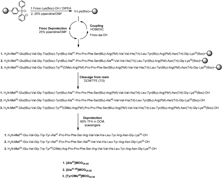 <t>Solid</t> <t>Phase</t> <t>Peptide</t> <t>Synthesis</t> of the linear mutated analogues of MOG 35–55 .