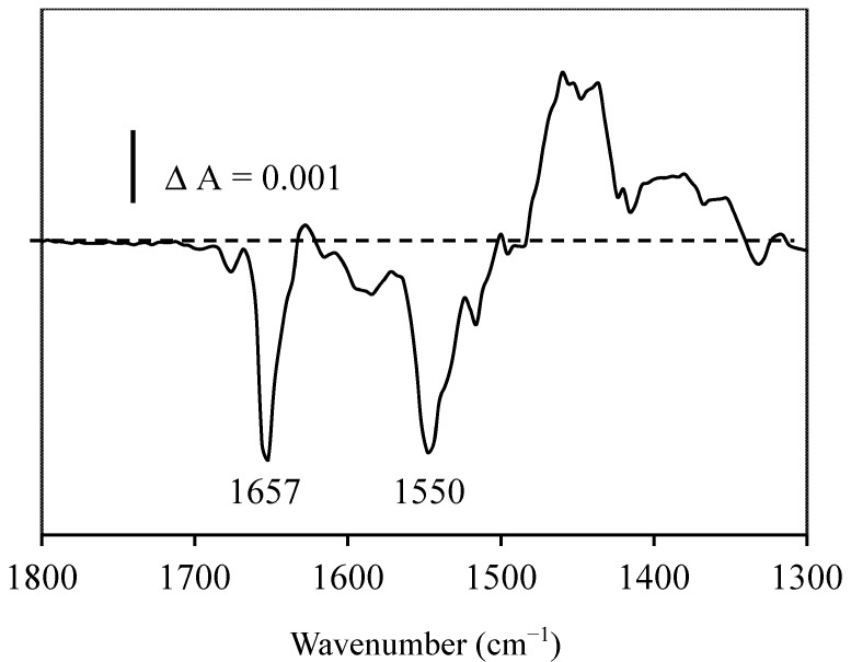 Infrared differential spectrum of resveratrol with BSA (the spectrum of trans resveratrol with BSA minus the spectrum of cis resveratrol with BSA) obtained after photo-isomerization in the same infrared cell.