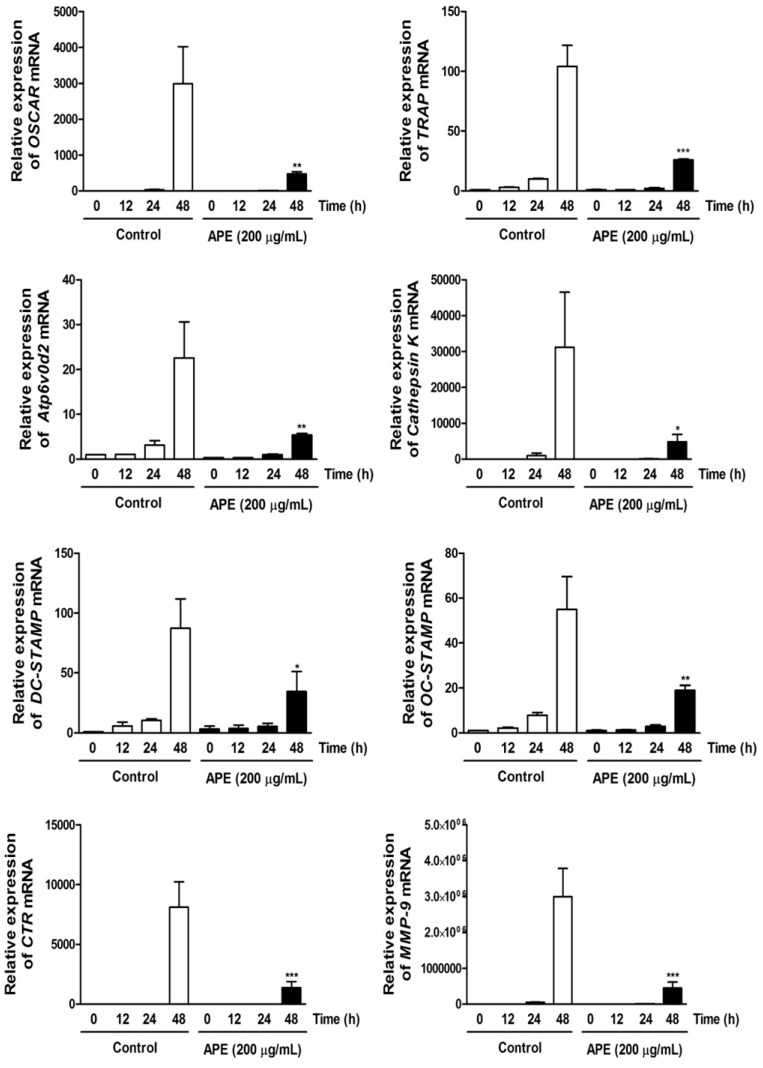 Aconitum pseudo-laeve var. erectum (APE) down-regulates the expression of osteoclast-specific marker genes. Bone marrow macrophages (BMMs) were stimulated with receptor activator of nuclear factor kappa-B ligand (RANKL; 100 ng/mL) and macrophage colony-stimulating factor (M-CSF; 30 ng/mL) in the presence or absence of APE (200 µg/mL) for the indicated times. Total RNA was isolated from cells using QIAzol reagent and mRNA expression levels of osteoclast-associated receptor (OSCAR), tartrate-resistant acid phosphatase (TRAP), Atp6v0d2, Cathepsin K, dendritic cell-specific transmembrane protein (DC-STAMP), osteoclast stimulatory transmembrane protein (OC-STAMP), calcitonin receptor, and matrix metallopeptidase 9 (MMP-9) were evaluated by real-time PCR.