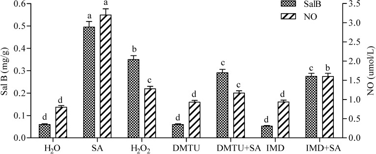 Effects of SA, exogenous H 2 O 2 , IMD, DMTU and complex treatments on the production of Sal B and NO in Salvia miltiorrhiza cell cultures. The concentrations for SA, H 2 O 2 , IMD, CAT and DMTU were the same as Figure 1 . The detection time for determining both contents of NO and Sal B was the same as Figure 3 . Different lowercase letters represented significance at 0.05.