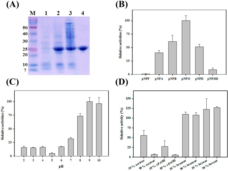 ( A ) SDS-PAGE analysis of PA27. Lane M, marker, lane 1 2; crude <t>Escherichia</t> coli extracts before and after induction; lane 3, supernatants of E. coli extracts; lane 4, PA27 after dialysis; ( B ) Substrate specificity of PA27 was investigated towards different p -NP esters; ( C ) pH stability of PA27; ( D ) Organic solvent-stable properties of PA27.