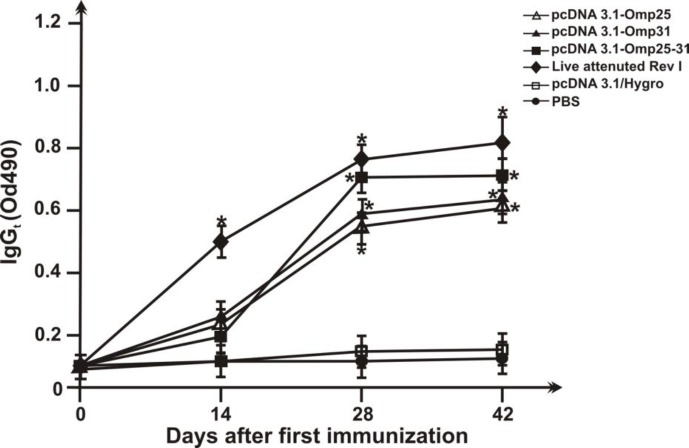 Serum IgG titers of mice immunized. Sera were collected from the seven groups of immunized BALB/c mice with different DNA vaccines (pcDNA3.1/Hygro-Omp25, pcDNA3.1/Hygro-Omp31 and pcDNA3.1/Hygro-Omp25-31) and native pcDNA3.1/Hygro and PBS and IgG titers were evaluated by a quantitative ELISA. Each value represents the mean OD ± standard deviation of antibodies. The statistical significance is represented by P