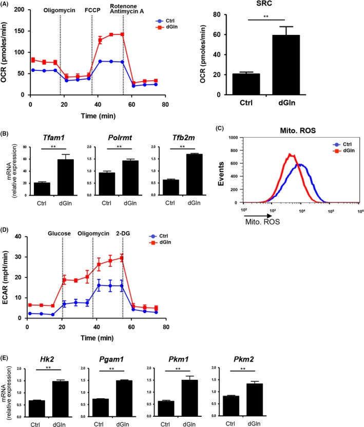 Glutamine‐restriction improves the metabolic status in CD 8 + T cells. OVA ‐specific OT ‐1 CD 8 + T cells were cultured as shown in (Figure 1 A). A, The O 2 consumption rate ( OCR ) was measured in real time under basal conditions and in response to indicated mitochondrial inhibitors. The spare respiratory capacity ( SRC ) is shown (left panel). Data are representative of at least 2 independent experiments. B, The gene expression of mitochondrial transcription factors ( Tfam1 and Tfb2 m ) and <t>RNA</t> polymerase ( Polrmt ) in CD 8 + T cells cultured under glutamine‐restricted conditions. The expression of mRNA was examined by quantitative RT ‐ <t>PCR</t> and compared between control (Ctrl)‐cultured and dG ln‐cultured cells (mean ± SD , n = 4 per group). C, Representative flow‐cytometric profiles of mitochondrial reactive oxygen species (ROS) . Data are representative of 2 independent experiments. D, The extracellular acidification rate ( ECAR ) was measured under basal conditions and in response to 10 mmol/L glucose, 100 mmol/L glucose and 10 μmol/L oligomycin. Data are representative of 2 independent experiments. E, The gene expression of glycolysis‐related enzymes in CD 8 + T cells cultured under glutamine‐restricted conditions. The expression of mRNA was examined by quantitative RT ‐ PCR and compared between Ctrl‐ and dG ln‐cultured cells (mean ± SD , n = 4 per group). ** P