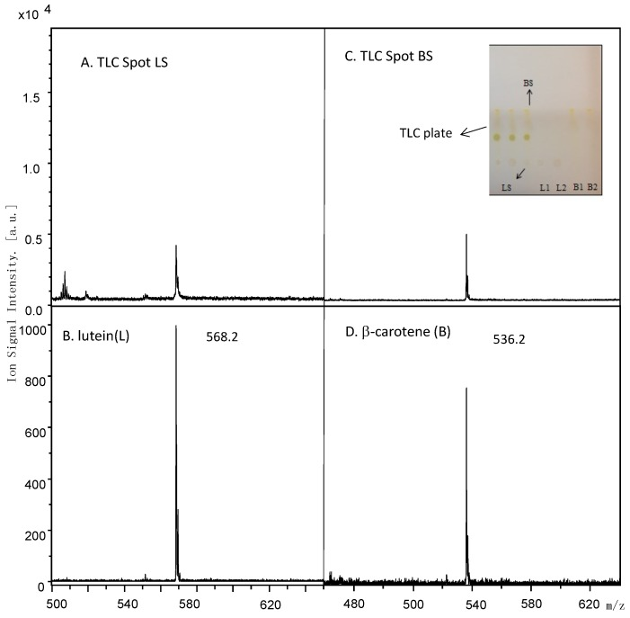Mass spectra of spinach extract TLC spot LS of experimental condition (panel A ) and TLC spot BS of experimental condition (panel C ) excised and compared to lutein (panel B ) and β-carotene (panel D ) standards.