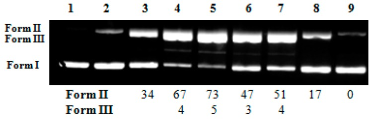 DNA photo-cleavage by various oxime ester conjugates at concentration of 500 μM with plasmid DNA pBR322, at 365 nm for 120 min. Top: Gel electrophoresis picture: Lane 1: DNA without UV irradiation; Lane 2: DNA with UV irradiation; Lanes 3–9: DNA + oxime derivatives ( 1 , 2 , 3 , 5 , 10 , 21 , and 19 , respectively) + UV irradiation; Bottom: Calculation of the % conversion to ss and ds damage.
