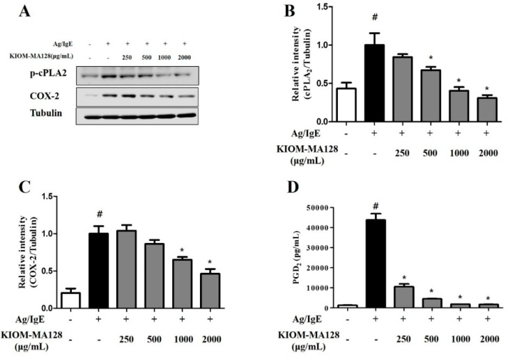 Inhibitory effects of KIOM-MA128 on PGD 2 production and the activation of the arachidonate cascade. RBL-2H3 mast cells were seeded on a 6-well plate (5 × 10 5 cells/well) in MEM-α with 10% FBS and incubated overnight at 37 °C. The cells were further incubated with DNP-IgE (0.1 μg) for 24 h and then treated with KIOM-MA128 (0–2000 μg/mL). After 1 h, they were stimulated with DNP-Ag (0.1 μg/mL) for 4 h. The amounts of PGD 2 were determined as described in the Materials and Methods section. The data represent the mean ± SD values of three independent experiments. The cells were washed with 1× DPBS and lysed with cell lysis buffer. The levels of p-cPLA 2 , COX-2 and α-tubulin were determined using the procedure described in the Materials and Methods section. # p