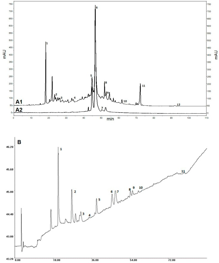 Chromatographic profiles of Ch-PRE ( A1 ) High Performance Liquid Chromatography coupled with a diode-array detector (HPLC-DAD) profile at 280 nm; ( A2 ) HPLC-DAD profile at 527 nm; and ( B ) HPLC coupled with a DAD and electrochemical detector (ED) (HPLC-DAD-ED). Legend: 1—Neochlorogenic acid, 2—Catechin, 3—Chlorogenic acid, 4—Procyanidin B2, 5—Cyanidin-3-glucoside, 6—Cyanidin-3-rutinoside, 7—Peonidin-3-glucoside, 8—Quercetin-3-rutinoside, 9—Quercetin-3-glucoside, 10—Kaempferol-3-glucoside, 11—Sakuranin, 12—Isosakuranetin.
