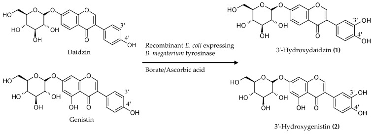 Diagram of the biotransformation of the soy isoflavone glycosides daidzin and genistin by the recombinant E. coli expressing B. megaterium tyrosinase.