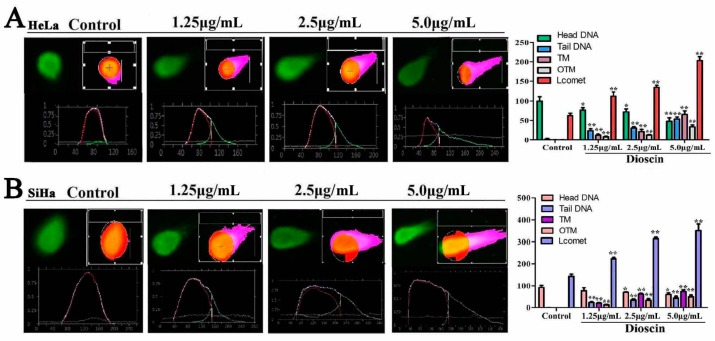 Dioscin induced DNA damage and cell cycle arrest of the HeLa and SaHa cells. ( A ) Dioscin induced DNA damage in HeLa cells by SCGE assay (200×, final magnification); ( B ) Dioscin induced DNA damage in SiHa cells by SCGE assay (200×, final magnification). Data are presented as mean ± SD ( n = 3). * p