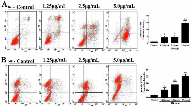 Dioscin induced HeLa and SiHa cell apoptosis. ( A ) Dioscin caused apoptosis in HeLa cells by flow cytometric analysis with Annexin V-FITC and PI-staining; ( B ) Dioscin caused apoptosis in SiHa cells by flow cytometric analysis with Annexin V-FITC and PI-staining. Data are presented as mean ± SD ( n = 3). * p