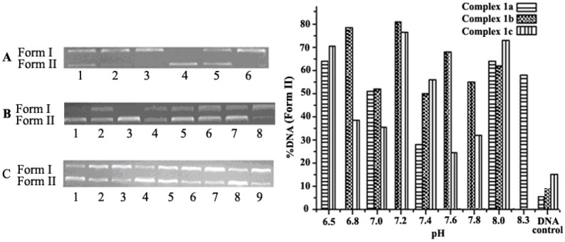 Histograms and electropherograms (the right side figure) representing cleavage of pUC19 plasmid DNA (0.008 µg/µL) in different pH buffer of 1a (6.25 × 10 −7 mol/L), 1b (3.13 × 10 −6 mol/L) and 1c (6.25 × 10 −7 mol/L) (5 mM Tris-HCl/10 mM NaCl) at 37 °C for 6 h. ( A ) Complex 1a ; Lanes 1−5: pH = 6.5, 7.0, 7.4, 8.0, 8.3, Lane 6 = DNA control, respectively; ( B ) Complex 1b; Lanes 1–7: pH = 6.8, 7.0, 7.2, 7.4, 7.6, 7.8, 8.0; Lane 8 = DNA control, respectively; ( C ) Complex 1c; Lanes 1–8: pH = 6.5, 6.8, 7.0, 7.2, 7.4, 7.6, 7.8, 8.0; Lane 9 = DNA control, respectively.