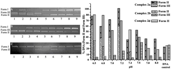 Histograms and electropherograms (the right side figure) representing cleavage of pUC19 plasmid DNA (0.008 µg/µL) in different pH buffer of 2a (6.25 × 10 −7 mol/L), 2b (3.13 × 10 −7 mol/L) and 2d (6.25 × 10 −7 mol/L) (5 mM Tris-HCl/10 mM NaCl) at 37 °C for 6 h. ( A ) Complex 2a; Lanes 1–8: pH = 6.5, 6.8, 7.0, 7.2, 7.4, 7.6, 7.8, 8.0; Lane 9 = DNA control, respectively. ( B ) Complex 2b and Lanes 1–8: pH = 6.5, 6.8, 7.0, 7.2, 7.4, 7.6, 7.8, 8.0 Lane 9 = DNA control, respectively; ( C ) complex 2d; Lanes 1–8: pH = 6.5, 6.8, 7.0, 7.2, 7.4, 7.6, 7.8, 8.0; Lane 9 = DNA control, respectively.