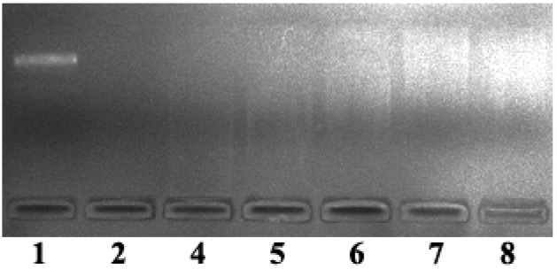 Electropherograms representing condensation and release of pUC19 plasmid DNA (0.008 µg/µL) in buffer of different weight ratios of GO to complex 2c (5 mM Tris-HCl/10 mM NaCl, pH = 7.4) at 37 °C. Lane 1 is DNA control, Lanes 2–8: 2c (6.25 × 10 −5 mol/L), 2c (3.13 × 10 −5 mol/L), 2c (6.25 × 10 −5 mol/L)/GO (0.67 μg/μL), 2c (6.25 × 10 −5 mol/L)/GO (1.34 μg/μL), 2c (3.13 × 10 −5 mol/L)/GO (0.67 μg/μL), 2c (3.13 × 10 −5 mol/L)/GO (1.34 μg/μL), respectively.