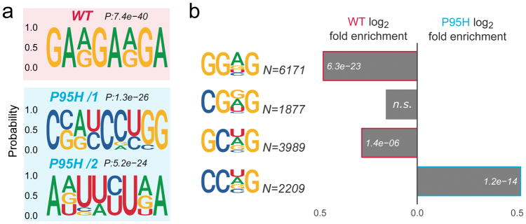 The <t>SRSF2</t> P95H mutation alters SRSF2 in vivo RNA motif specificity (a) Top enriched motifs for WT and P95H SRSF2 binding sites, identified by discriminative analysis of kmer composition. Corresponding p-values are displayed on top of each logo. (b) Relative enrichment of the SSNG (S=C/G, N=C/G/A/U) RNA consensus motifs in RNA regions preferentially bound by WT versus P95H SRSF2. The number of motif occurrences and differential enrichment p-values are displayed for each bar.
