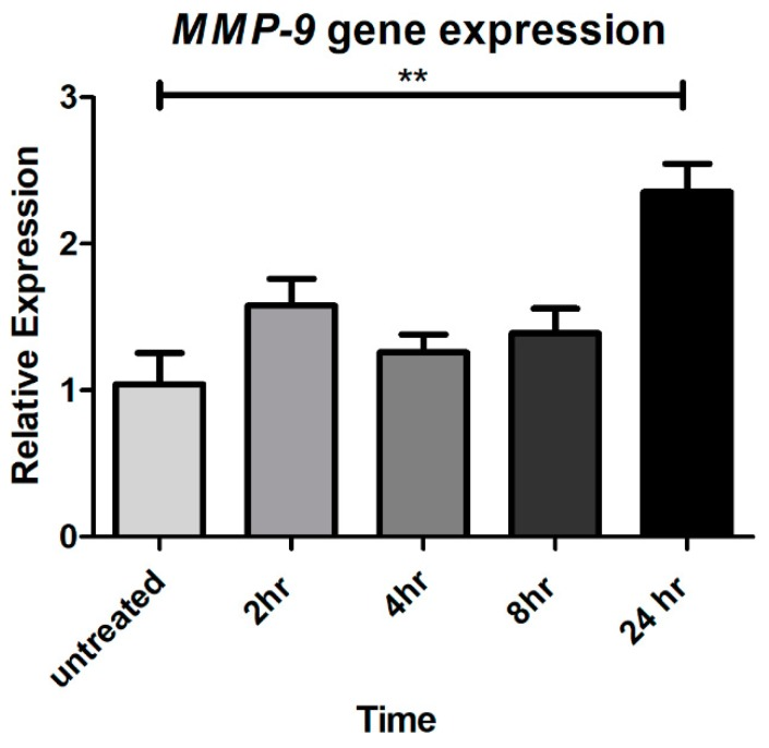 CTSS increases MMP-9 gene expression after 24 h in human corneal epithelial cells. MMP-9 gene expression in HCE-T cells without and with CTSS. The amount of CTSS added corresponded to an activity level found in the 90th–95th percentile of SS patients (18,000 RFU, added to 500 µL of cell medium), as described in detail in Methods . MMP-9 gene expression was normalized to expression of the endogenous gene, GAPDH ( n = 3 samples/group, ** p ≤ 0.01, data are represented as mean ± SEM and one-way ANOVA with Dunnett's multiple comparison was used to compare treated to untreated cells).