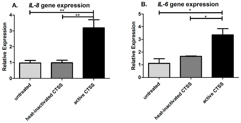 CTSS activity is required for early induction of pro-inflammatory cytokines in human corneal epithelial cells. ( A ) IL-8 gene expression in HCE-T cells without (untreated), with heat-inactivated CTSS, and with active CTSS; ( B ) IL-6 gene expression in HCE-T cells without (untreated), with heat-inactivated CTSS, and with active CTSS. IL-8 and IL-6 gene expression were normalized to expression of the endogenous gene, GAPDH ( n = 3 samples/group, * p ≤ 0.05, ** p ≤ 0.01, data are represented as mean ± SEM, and one-way ANOVA with Tukey's multiple comparison was used to compare cells within different CTSS treatments. The amount of CTSS added corresponded to an activity level found in the 90th–95th percentile of SS patients (18,000 RFU, added to 500 µL of cell medium), as described in detail in Methods . Heat inactivation was by heating at 90 °C for 30 min.