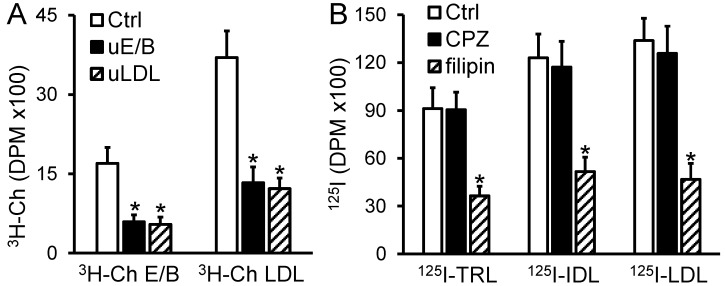 Transendothelial transport of radiolabeled apoB-LPs is inhibited by filipin and unlabeled competitor lipoproteins. ( A ): The AP side of the MAEC monolayer was incubated with 20 µg/mL (35,000 DPM) of 3 H-Ch-labeled E/B-LPs ( 3 H-Ch E/B) or 3 H-Ch-labeled LDLs ( 3 H-Ch LDL) in the presence of 800 µg/mL of unlabeled E/B-LPs (uE/B) or unlabeled LDLs (uLDLs) or in the absence of unlabeled lipoproteins as a control (Ctrl) for 24 h. ( B ): The AP side of the MAEC monolayer was pre-incubated with 20 µg/mL chlorpromazine, 5 µg/mL filipin, or 1 µL/mL dimethyl sulfoxide as a Ctrl for 1 h, followed by incubation with 20 µg/mL (167,000 DPM) of 125 I-labeled TRLs, IDLs, or LDLs for 24 h. The radioactivity in the BL medium were counted. Values represent the mean ± SE of 3–5 experiments; * p