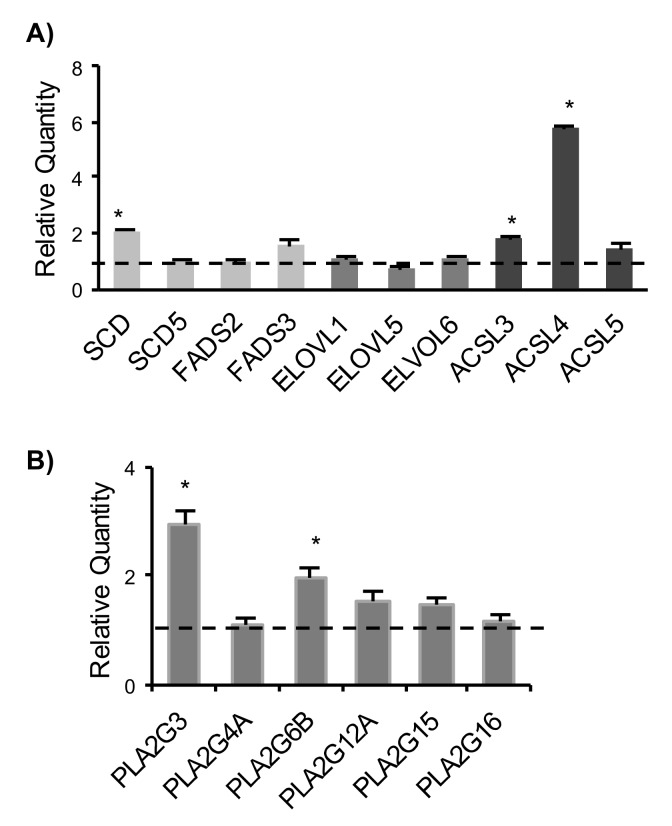 Gene expression analysis of fatty acid-metabolizing enzymes in control and H-RasV12 expressing fibroblasts by qRT-PCR. ( A ) Gene expression analysis of desaturases ( SCD and FADS ), elongases ( ELOVL ) and acyl-coenzyme A synthetases ( ACSL ). ( B ) Gene expression analysis of phospholipases A2 ( PLA2 ). Ten ng of each cDNA were used as template. Reactions were performed in triplicate, using SYBR green technology StepOne RT-PCR machine to detect amplification. The GAPDH gene was used as endogenous control. The fold expression in H-RasV12 fibroblasts with respect to control is displayed, expressed as Relative Quantity (RQ). The analysis was repeated three times in triplicate and the mean ± S.D. is reported (* p
