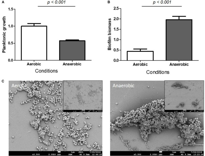 Hypoxia increased S. aureus biomass biofilm. Planktonic growth normalized on control (A) and biofilm biomass quantified by crystal violet staining (B) under aerobic and anaerobic conditions. ( n = 9). Scanning Electronic Microscopy (SEM) (C) . Main panels: scale bar = 1 μm and insert panels showing the homogeneity on a wide field: scale bar = 10 μm.