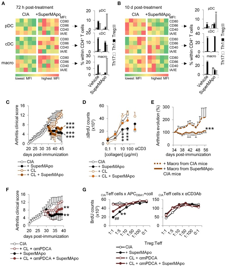 Antigen-presenting cells demonstrate reprogramming in vivo after SuperMApo treatment of CIA mice. (A,B) Costimulatory (CD80/CD86/CD40) and MHC-II molecule (IA/IE) mean florescence intensity (MFI) expressions, evaluated in spleen plasmacytoid DC (pDC), conventional DC (cDC) and macrophages (macro) 72 h and 10 days after SuperMApo or vehicle treatment of arthritic mice. Data from representative experiments showing cell marker expression from individual mouse (5 mice per group). Th17, Th1 and Treg CD4 + T cell polarizations by the same APC are also shown (bars represent mean ± s.e.m. of triplicates of APC isolated from each mouse and cultured with naïve CD4 + T cells). (C) Arthritis clinical score of mice receiving SuperMApo treatment or vehicle and clodronate-loaded (CL) or control liposomes (mean ± s.e.m., 5 mice per group). *** P