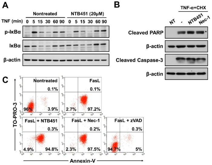 Effect of NTB451 on TNF-α-induced NF-κB activation and on the apoptotic cell death induced by TNF-α and FasL. ( A ) L929 cells were treated with TNF-α (400 units/mL) for the indicated times in the presence or absence of NTB451 (20 µM). Cells were lysed and immunoblotted with the antibodies against phospho-IκB, IκB, and β-actin. ( B ) L929 cells were treated with TNF-α (400 units/mL) plus CHX (10 µg/mL) for 3 h in the presence or absence of NTB451 (20 µM) or Nec-1 (10 µM), and cell apoptosis was analyzed by immunoblotting with anti-cleaved PARP and anti-cleaved caspase-3 in cell lysates. * indicates a nonspecific band. ( C ) Apoptotic cell death in Jurkat cells was induced with 5% FasL for 3 h in the presence or absence of NTB451 (20 µM), Nec-1 (10 µM) or zVAD (20 µM). Then, the cells were stained with PE-conjugated Annexin V and TO-PRO-3 (10 nM), followed by FACS analysis.