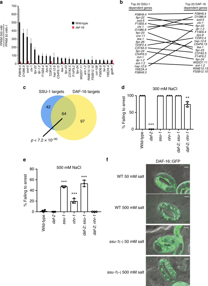SSU-1 and insulin-like signaling via the FOXO transcription factor DAF-16 function in parallel to regulate gene expression and developmental arrest in response to osmotic stress. a Average fold change mRNA expression in the wild-type and daf-16(m26) mutant embryos at 500 mM NaCl as compared to 50 mM NaCl measured by RNA-seq (FPKM 500 mM NaCl/FPKM 50 mM NaCl + 1). Shown are the 25 genes that exhibited the greatest increase in expression in wild-type animals at 500 mM NaCl vs. 50 mM NaCl. n = 3 replicates. Error bars, s.d. b Comparison of the 20 genes exhibiting the largest SSU-1 and DAF-16-dependent increases in expression in response to 500 mM NaCl. c Venn diagram of genes with a greater than twofold increase in RNA expression in response to osmotic stress and dependent on SSU-1 (blue) and/or DAF-16 (yellow). p -value represents normal approximation to the hypergeometric probability (See Statistics and Reproducibility). d Percent of wild-type, daf-2(e1370) , ssu-1(fc73) , and nhr-1(n6242) mutant embryos failing to arrest development in response to 300 mM NaCl. n > 100 animals. Error bars, s.d. e Percent of wild-type, daf-2(e1370) , ssu-1(fc73) , and nhr-1(n6242) mutant embryos failing to arrest development in response to 500 mM NaCl. n > 100 animals. Error bars, s.d. f Representative confocal images of DAF-16::GFP localization after 5 h of exposure to osmotic stress (500 mM NaCl) in the wild-type and ssu-1(fc73) mutant embryos. Scale bars, 10 µm. Source data are provided as a Source Data file