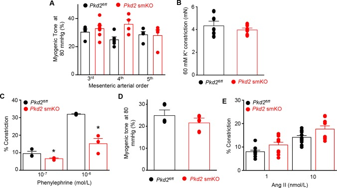 Myocyte <t>PKD2</t> knockout attenuates phenylephrine-induced vasoconstriction, but does not alter pressure or angiotensin II-induced vasoconstriction in hindlimb arteries. ( A ) Mean myogenic tone at 80 mmHg illustrating that myogenic tone is similar in third-, fourth-and fifth-order mesenteric arteries and unaltered by PKD2 knockout ( Pkd2 fl/fl : 3 rd n = 4; 4 th n = 5; 5 th n = 4 and Pkd 2 smKO: 3 rd n = 7; 4 th n = 4; 5 th n = 4). ( B ) Mean data for 60 mM K+-induced constriction in first-and second order mesenteric artery rings ( Pkd2 fl/fl n = 5; Pkd 2 smKO n = 6). ( C ) Mean data for phenylephrine-induced vasoconstriction in pressurized, endothelium-denuded 4 th order mesenteric arteries ( Pkd2 fl/fl , n = 3 and Pkd 2 smKO, n = 3). * indicates p