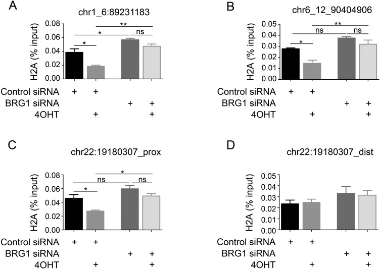 BRG1 promotes H2A release from chromatin near DSB sites. (A, B) H2A ChIP assays were performed on AsiSI-ER-U2OS cells treated with 4OHT or not for 4 h; the products were assessed by real-time q-PCR amplification using primers flanking the chr1_6:89231183 and chr6_12:90404906 DSB sites. Each value represents the mean ± S.D. of three independent experiments. (C, D) H2A ChIP assays were performed on AsiSI-ER-U2OS cells after treatment with 4OHT for 4 h or not; the products were assessed by real-time q-PCR amplification using primers near or distal to the chr22:19180307 DSB site. Each value represents the mean ± S.D. of three independent experiments.