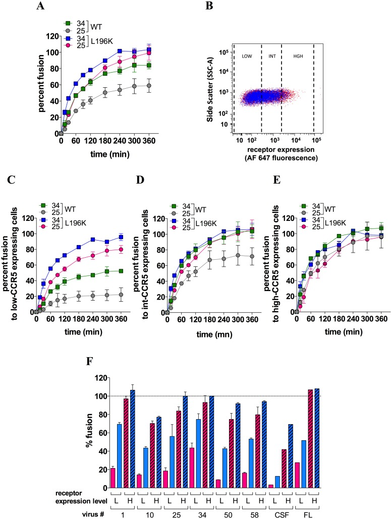 Role of CCR5 dimerization in HIV-1 entry into T-cells. A Fusion kinetics of BlaM-vpr-containing virus #25 or 34 with CD4+ A3.01 T-cells expressing FLAG/SNAP-tagged WT-CCR5 or L196K-CCR5. Data points represent means ± SEM of 2 independent determinations (out of 5). B Gating strategy of A3.01 cells expressing WT-CCR5 (red) or L196K-CCR5 (blue) at a low (GMFI = 111 and 123 for WT-CCR5 and L196K-CCR5, respectively), intermediate (599 and 533) or high level (2903 and 2382). Shown are representative flow cytometry plots of cell side scatter vs receptor expression level revealed with the AlexaFluor 647-conjugated anti-FLAG mAb M2. On the whole cell populations, both receptors were expressed at similar expression levels (GMFI = 362 and 312 for WT-CCR5 and L196K-CCR5, respectively). Comparable results were obtained using the unconjugated M2 revealed by an AlexaFluor 647-conjugated goat anti-mouse IgG (GAM) (GMFI = 5871 and 3342) C , D and E The virus-cell fusion experiments shown in A were analyzed with A3.01 T-cells expressing low ( C ), intermediate ( D ) or high ( E ) cell surface level of either WT- or L196K-CCR5. F Levels of fusion at 3 h for the indicated viruses were measured with A3.01 T-cells expressing low (L) or high (H) level of either WT- (red bars) or L196K-CCR5 (blue bars). Results are means ± SEM of 3 independent determinations (except for the non-M and M-tropic viruses JR-CSF and JR-FL where n = 1). In panels A , C , D , E and F , results are expressed as percents of fusion relative to the maximum extent of fusion (F max ) of virus #34 with L196K-CCR5-expressing cells. This F max value, expressed as the percentage of cells containing BlaM-vpr, ranged between 40–60% and did not vary with the receptor expression level.