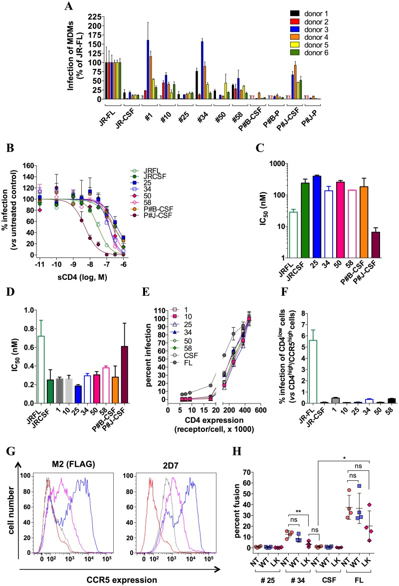 Blood-derived HIV-1 isolates depend on CCR5 plasticity for infection of MDMs. A MDMs from 6 different healthy donors were infected by virus clones pseudotyped with gp160 #1, #10, #25, #34, #50 or #58, the M-tropic or the non-M-tropic HIV-1 strain JR-FL or JR-CSF, respectively, or recombinant viral populations generated from plasma (P) or cerebrospinal fluid (CSF) of two patients with HIV-1-associated encephalitis (P#B and P#J). Virus quantities that produced comparable levels of infectivity in T-cells isolated from the same donors ( i . e . 10 5 RLU) were used. Of note, similar results were obtained after normalizing the virus quantities to the p24 content. Results represent infectivities of the viruses in MDMs, determined in duplicate, and normalized to infectivity of JR-FL (arbitrarily set at 100%). B Sensitivity of viruses to sCD4. Some of the previous viruses were tested for their sensitivity to inhibition by increasing concentrations of sCD4 in infection experiments of PHA/IL-2- activated CD4 T-cells. The virus amounts were selected in such a way that infectivities in the absence of sCD4 were similar ( i . e . 10 5 RLU of luciferase activity). The data points shown are from one representative experiment performed in duplicate, out of three experiments performed independently. The independent experiments were carried out with the lymphocytes from different healthy donors. Infectivity of the viruses was expressed as percentage of that measured in the absence of sCD4 (100%). Inhibition curves were fitted according to a sigmoidal dose-response model with a variable slope. C The panel shows sCD4 IC 50 values that were deduced from inhibition curves with GraphPad Prism 6. Results are means ± SD of 3 independent determinations. D Dose-response inhibitions of infection of activated CD4 T-cells by increasing concentrations (ranging between 10 −12 and 3x10 -8 nM) of the anti-CD4 mAb Q4120 were carried out with the indicated viruses. Then, IC 50 values for inhibition of i