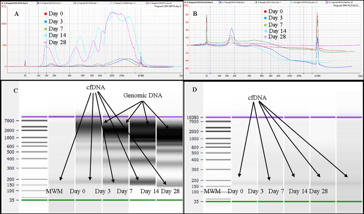 Analysis of plasma cfDNA obtained from one representative pregnant donor blood stored at 22°C using Agilent Bioanalyzer 2100 instrument and Agilent DNA high sensitivity Kit. A, Overlaid electropherograms of plasma cfDNA extracted from blood stored (at 22°C) in K 3 EDTA tubes at days 0, 3, 7, 14 and 28. B, Overlaid electropherograms of plasma cfDNA extracted from blood stored (at 22°C) in ProTeck tubes at days 0, 3, 7, 14 and 28. C, Bioanalyzer gel image for blood stored in K 3 EDTA tubes. D, Bioanalyzer gel image for blood stored in ProTeck tubes. Cell-free DNA obtained from 3 pregnant donors were analyzed. This figure shows only the results of one representative pregnant donor.