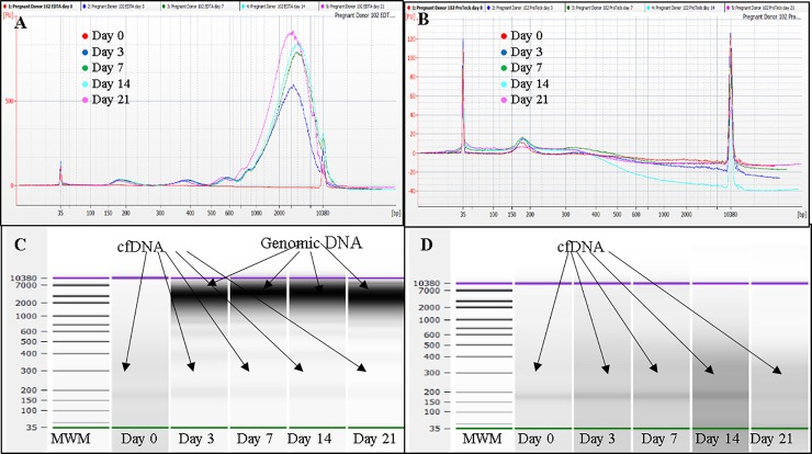 Analysis of plasma cfDNA obtained from one representative pregnant donor blood stored at 4°C using Agilent Bioanalyzer 2100 instrument and Agilent DNA high sensitivity Kit. A, Overlaid electropherograms of plasma cfDNA extracted from blood stored in K 3 EDTA tubes at days 0, 3, 7, 14 and 21. B, Overlaid electropherograms of plasma cfDNA extracted from blood stored in ProTeck tubes at days 0, 3, 7, 14 and 21. C, Bioanalyzer gel image for blood stored in K 3 EDTA tubes. D, Bioanalyzer gel image for blood stored in ProTeck tubes. Cell-free DNA obtained from 3 pregnant donors were analyzed. This figure shows only the results of one representative pregnant donor.