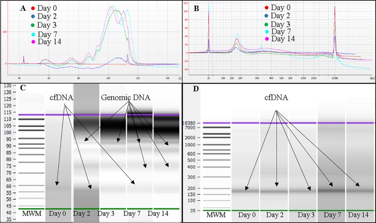Analysis of plasma cfDNA obtained from one representative pregnant donor blood stored at 30°C using Agilent Bioanalyzer 2100 instrument and Agilent DNA high sensitivity Kit. A, Overlaid electropherograms of plasma cfDNA extracted from blood stored in K 3 EDTA tubes at days 0, 2, 3, 7 and 14. B, Overlaid electropherograms of plasma cfDNA extracted from blood stored in ProTeck tubes at days 0, 2, 3, 7 and 14. C, Bioanalyzer gel image for blood stored in K 3 EDTA tubes. D, Bioanalyzer gel image for blood stored in ProTeck tubes. Cell-free DNA obtained from 3 pregnant donors were analyzed. This figure shows only the results of one representative pregnant donor.