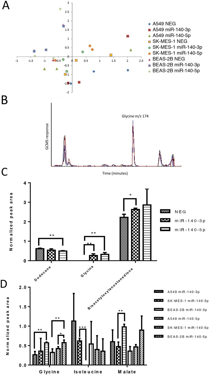 The two strands of miR-140 have minor impact upon the metabolite profile of lung cancer cells Lung cancer cells (A549 and SK-MES-1) and BEAS-2B lung epithelial cells were treated with miRNA mimics for 24 hours before cell samples were collected for metabolite analysis using Mass spectrometry (GC-MS). (A) A principle component analysis of the metabolite data set for the three cell lines without treatment (NEG) and with either miRNA mimic. (B) Example GCMS chromatogram of m/z 174 representing glycine levels in the control (NEG, black line) and after treatment with miR-140-3P (red line) and miR-140-5P (blue line). (C) Normalized peak area of metabolites which differed in level in A549 cells dependent on treatment. (D) Normalized peak area of metabolites which differed in level dependent on the cell line studied. Data are presented as mean + SEM, experiments were undertaken in triplicate, T -test and Mann Whitney tests were used to assess significance among multiple groups with * p