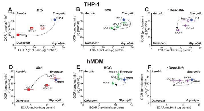 Phenograms demonstrate that increasing MOI of Mtb shifts macrophages towards quiescent energy phenotypes. Basal OCR and ECAR measurements from the respiratory assay ( Figure 2 ) before addition of oligomycin were plotted to generate phenograms of ( A–C ) PMA-differentiated THP-1 cells and ( D–F ) hMDMs infected with Mtb , BCG and ∆Dead Mtb at MOIs of 1, 2.5 and 5. Data are representative of three independent experiments. Data shown are the mean ± SD (n = 6 biological replicates). Student's t test relative to uninfected cells; #, p