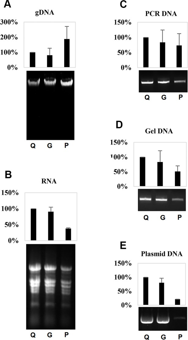 The efficiency of filter paper for purification of nucleic acids from various sources using respective Qiagen kits. (A) Tomato genomic DNAs purified using Qiagen DNeasy plant mini kit. (B) Tomato total RNAs purified using Qiagen RNeasy plant mini kit. (C) PCR products of a GUS fragment purified using Qiagen QIAquick PCR purification kit. (D) PCR products of GUS fragment recovered from an agarose gel using a Qiagen QIAquick gel extraction kit. (E) pUC -19 plasmid DNAs purified using a Qiagen QIAprep spin miniprep kit. For each panel, from left to right are (Q) nucleic acid purified in experiments using original Qiagen spin column, (G) reassembled spin column using two layers of Whatman glass microfiber filters (Grade GF/F), and (P) reassembled spin column using two layers of Whatman qualitative filter paper, (Grade 3) respectively. Upper panel is quantification data based on three experimental replicates normalized according to performance of the Qiagen kit; lower panel is an image of agarose gel electrophoresis for the same volume of purified nucleic acids.