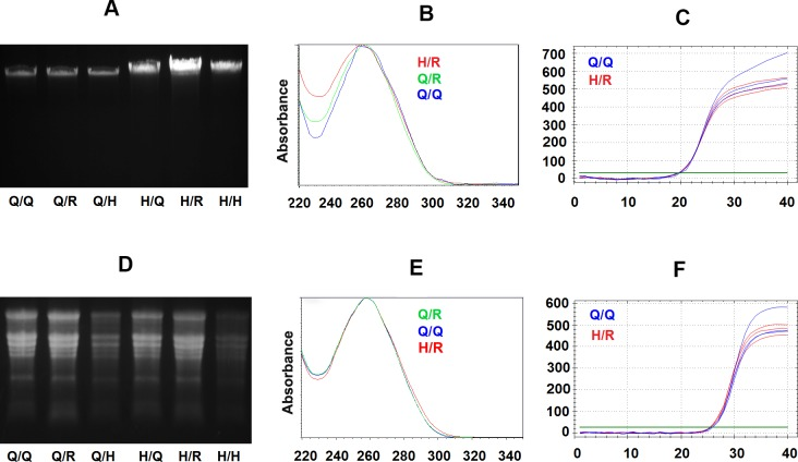 Evaluation of purification of tobacco genomic DNA and total RNA using filter paper-based spin columns with respective Qiagen kit buffers and homemade buffers. (A) Agarose gel electrophoresis for 2.5 μl tobacco genomic DNAs elution from purification experiments using Qiagen DNeasy plant mini kit buffers with Qiagen original spin column (Lane Q/Q), filter paper recharged used spin column (Lane Q/R) and filter paper-based homemade spin column (Lane Q/H*), followed by tobacco genomic DNAs purified using homemade buffer with Qiagen original spin column (Lane H/Q), filter paper recharged used spin column (Lane H/R) and filter paper-based homemade spin column (Lane H/H*). (B) UV spectrum curve of tobacco DNAs purified using Qiagen kit (Q/Q, black curve), filter paper recharged spin columns with Qiagen kit buffers (Q/R, blue curve) or homemade buffers (H/R, red curve) from the same amount leaf tissue. Y-axis is UV absorbance, and X-axis is wavelength (nM). (C) Amplification plots for three duplicated qPCR reactions contain 20 ng DNA purified using Qiagen kit (Q/Q, Blue curves) or DNA purified from filter paper recharged spin column with homemade buffer (H/R, Red curves) respectively. The x-axis is PCR cycle numbers, Y-axis is the level of SYBR fluorescence, and the green line is an arbitrary threshold to determine the Cq value (the fractional cycle number at which amplification curve meet threshold level). (D) MOPS-formaldehyde denaturing agarose gel electrophoresis separated 5 μl RNA purified using Qiagen RNeasy plant mini kit buffers with a Qiagen original spin column (Lane Q/Q), filter paper recharged used spin column (Lane Q/R) and homemade filter paper-based spin column (Lane Q/H*), followed total tobacco RNAs purified by using homemade buffer with Qiagen original spin column (Lane H/Q), filter paper recharged used spin column (Lane H/R) and filter paper-based homemade spin column (Lane H/H*). (E) UV spectrum of tobacco total RNA purified using Qiagen kit (Q/Q, black c
