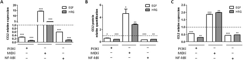 CCL2 expression is regulated by HER2 signaling in SKBr3 and BT474 cells. A-B) CCL2 mRNA ( A ) and protein ( B ) quantification by qRT-PCR and ELISA, respectively, in SKBr3 cells treated with EGF or HRG and/or with PI3Ki (LY294002), MEKi (UO126), or NF-kBi (BAY 11–7082) inhibitors for 6 h. C ) CCL2 mRNA expression in BT474 cells treated as in A. Data are expressed as fold to EGF/HRG treated cells (dotted lines) and are representative of at least two experiments. *p