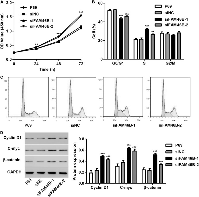 FAM46B silencing promoted cell proliferation and cell cycle progression in P69 cells After P69 cells were transfected with siFAM46B-1 and siFAM46B-2, cell proliferation, cell cycle progression and the expression of C-myc, Cyclin D1, and β-catenin were measured by CCK-8 assay a , flow cytometry b , c , and western blotting d , respectively. ** P