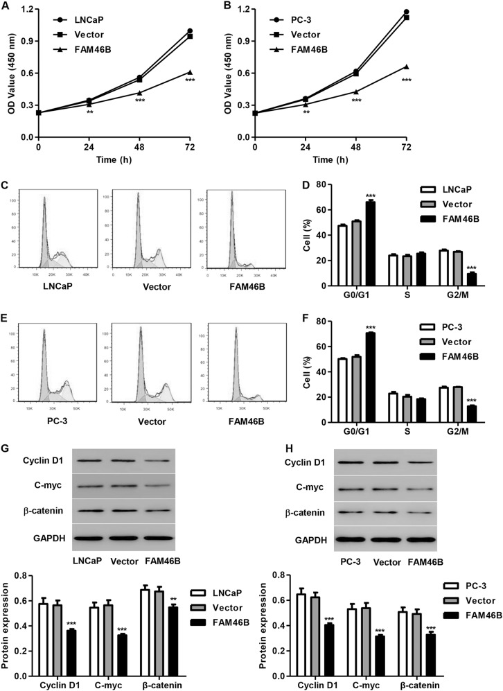 FAM46B overexpression inhibited cell proliferation and cell cycle progression in LNCaP and PC-3 cells After LNCaP and PC-3 cells were transfected with pLVX-Puro-FAM46B, cell proliferation, cell cycle progression and the expression of C-myc, Cyclin D1, and β-catenin were measured by CCK-8 assay a , b , flow cytometry c – f , and western blotting g , h , respectively. ** P