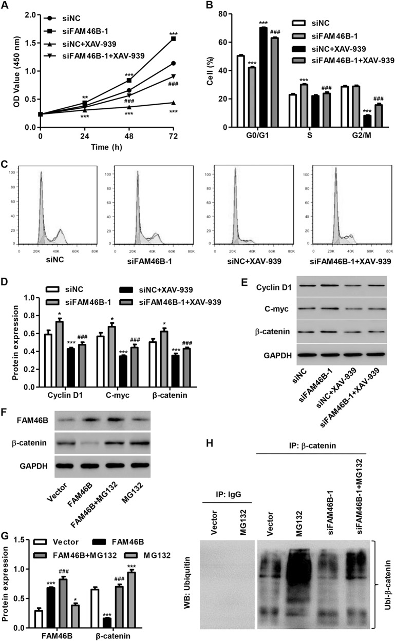 XAV-939 treatment inhibited FAM46B silencing-induced PC cell proliferation and cell cycle process After P69 cells were transfected with siFAM46B-1 with or without XAV-939 treatment (20 μ m ), cell proliferation and cell cycle progression were measured by <t>CCK-8</t> assay a and flow cytometry b , c , and the expression of C-myc, Cyclin D1, and β-catenin was measured by western blotting d , e . PC-3 cells transfected with pLVX-Puro-FAM46B were treated with MG132 (50 μ m ) for 4 h, and the expression of FAM46B and β-catenin proteins was measured by western blotting f , g . β-catenin was immunoprecipitated and immunoblotted in P69 cells transfected with siFAM46B-1 with or without MG132 (50 μ m ) treatment for 4 h h . * P