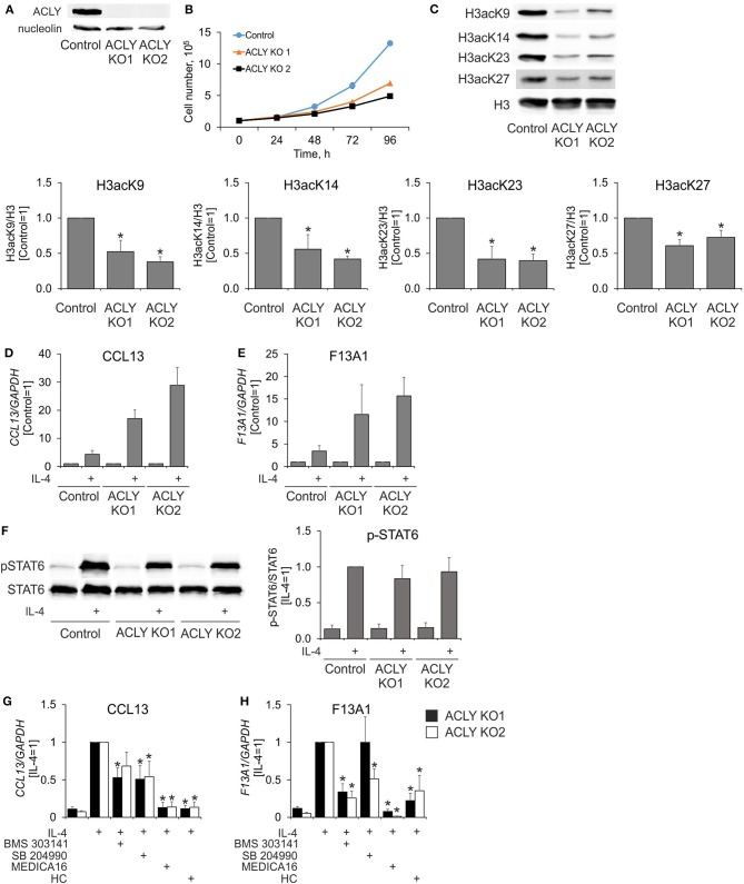 ACLY inhibitors suppress IL-4-induced gene expression in ACLY knockout THP-1 cells. (A,B) Western blot analysis of ACLY protein expression (A) and growth curves (B) of control and ACLY knockout (ACLY KO) THP-1 cells. (C) Western blot analysis of histone H3 acetylation at K9, K23, K27, and K14 in control or ACLY KO THP-1 macrophages. (D,E) Q-PCR analysis of IL-4—induced mRNA expression of CCL13 and F13A1 in control or ACLY KO THP-1 macrophages. (F) Western blot analysis of STAT6 phosphorylation in control or ACLY KO THP-1 macrophages. (G,H) Q-PCR analysis of mRNA expression of CCL13 and F13A1 in ACLY KO THP-1 macrophages stimulated with IL-4 in the presence of BMS 303141, SB 204990, MEDICA16 or HC. * p