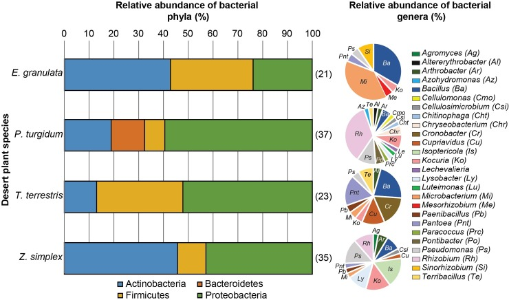Taxonomic composition of culturable root endosphere bacteria (endophytes) from Jizan desert plants. Relative abundance of the bacterial phyla (bar chart) and genera (pie chart) as a percentage of the total bacteria isolated from each plant species' root endosphere (presented after each bar in parentheses), based on the full-length 16S rRNA sequences.